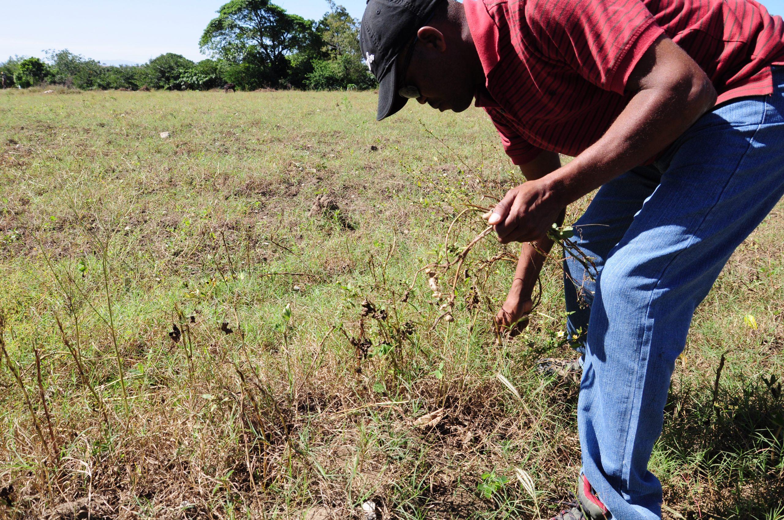 Haitian farmers call for 'food sovereignty'
