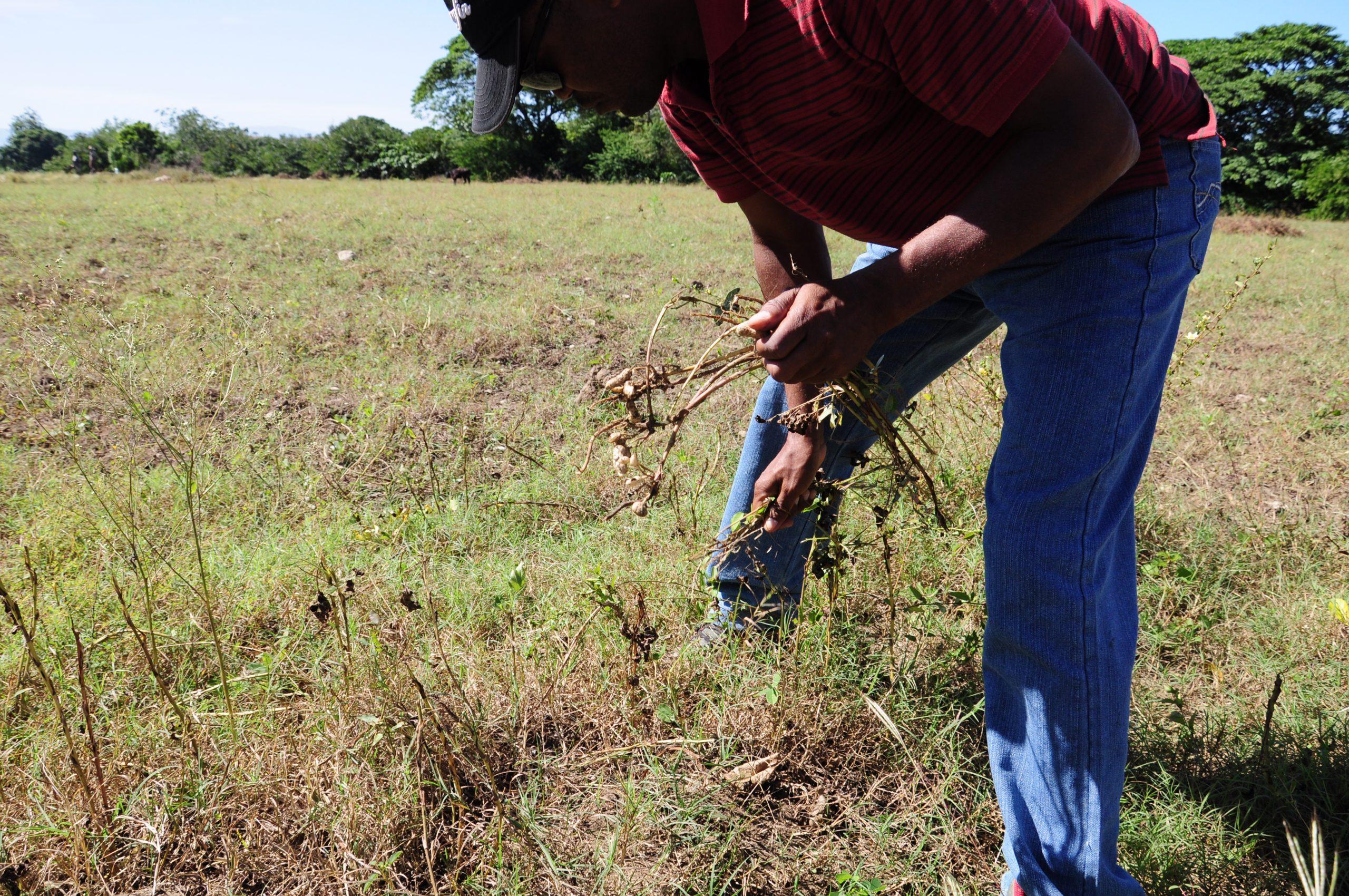 Haiti's rising food insecurity risks social tension, says FAO